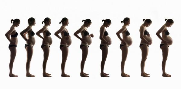 fases embarazo