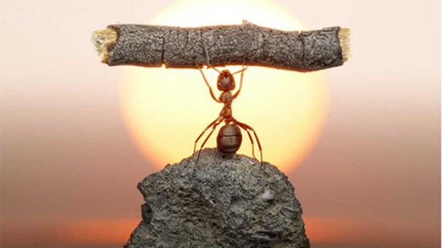 resiliencia-equilibrio.jpg